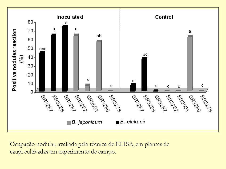 Ocupação nodular, avaliada pela técnica de ELISA, em plantas de caupi cultivadas em experimento de campo.