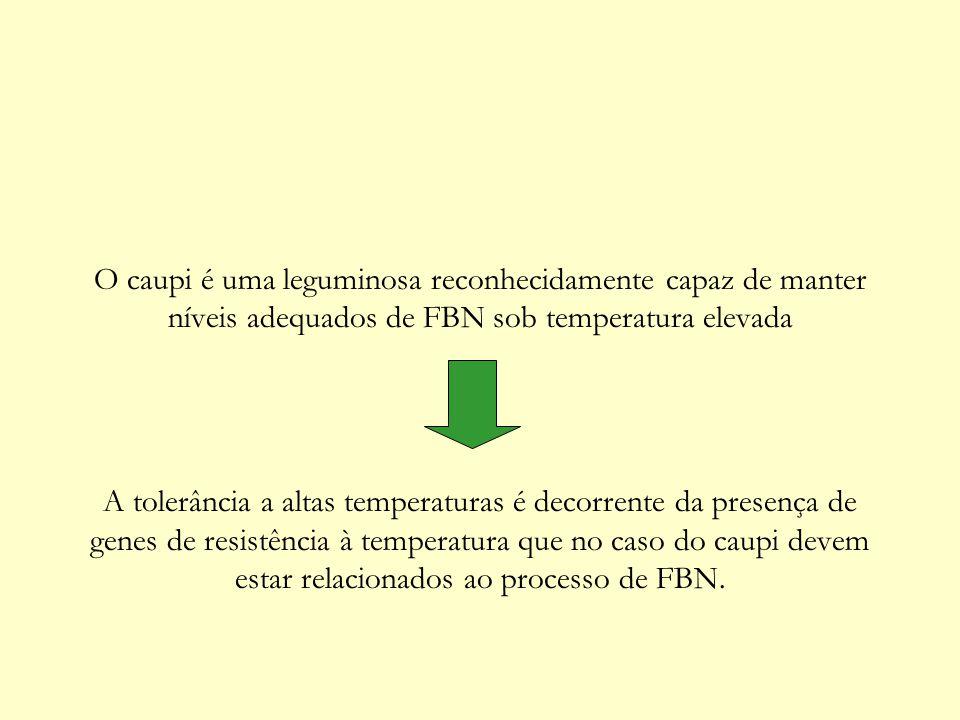 O caupi é uma leguminosa reconhecidamente capaz de manter níveis adequados de FBN sob temperatura elevada A tolerância a altas temperaturas é decorren