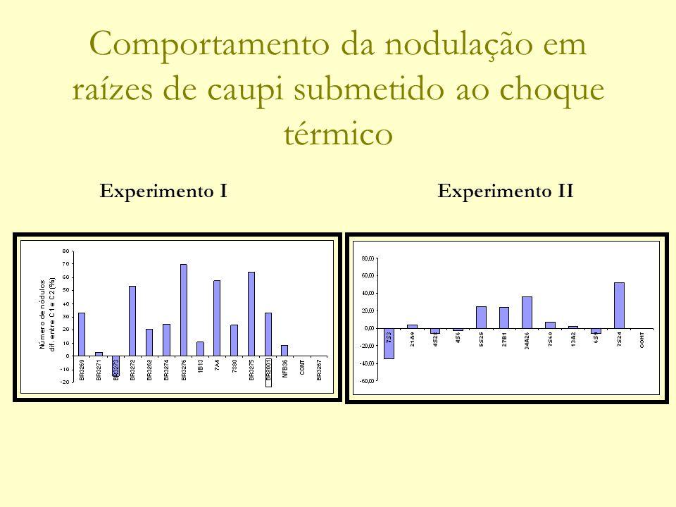 Comportamento da nodulação em raízes de caupi submetido ao choque térmico Experimento IExperimento II