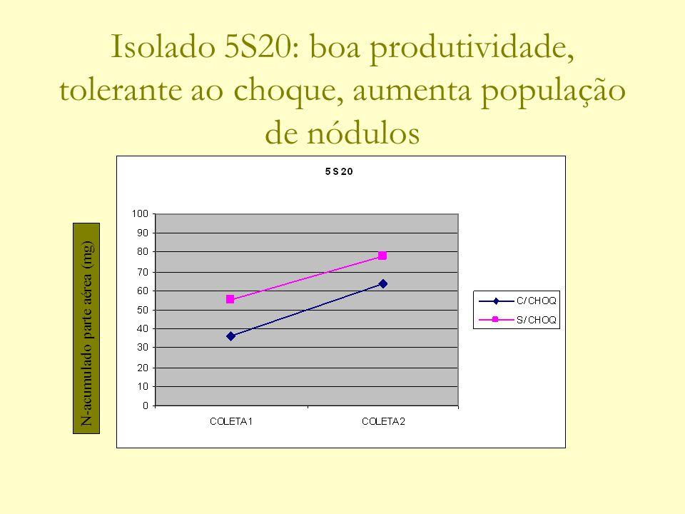 Isolado 5S20: boa produtividade, tolerante ao choque, aumenta população de nódulos N-acumulado parte aérea (mg)