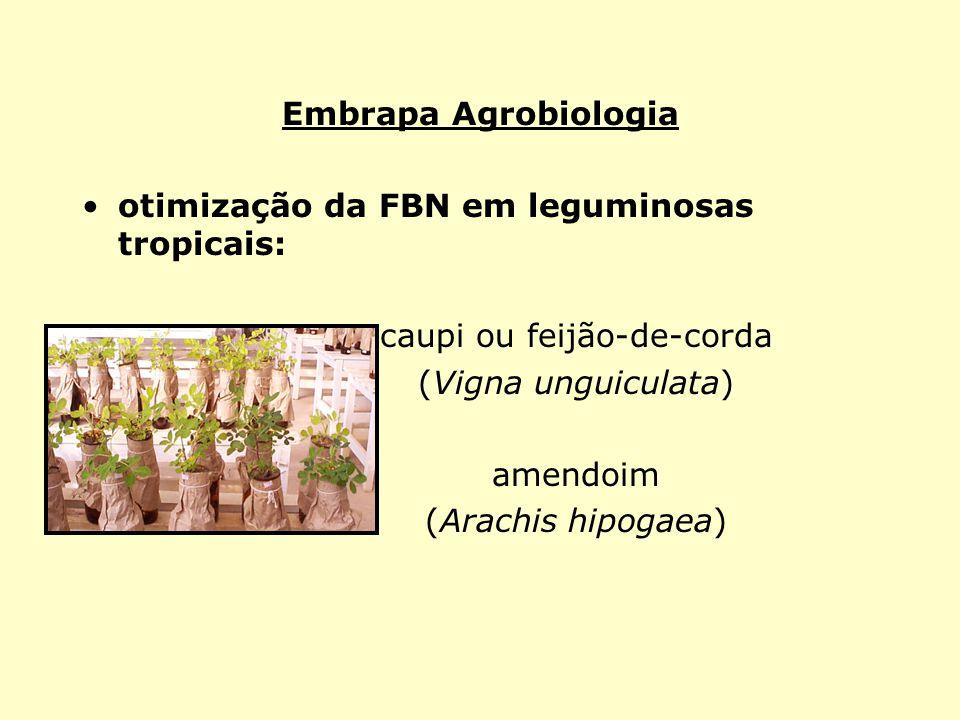 Embrapa Agrobiologia otimização da FBN em leguminosas tropicais: caupi ou feijão-de-corda (Vigna unguiculata) amendoim (Arachis hipogaea)