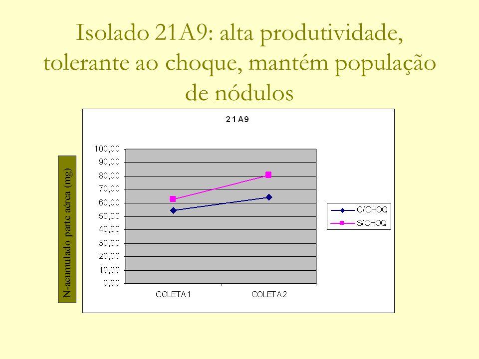 Isolado 21A9: alta produtividade, tolerante ao choque, mantém população de nódulos N-acumulado parte aérea (mg)