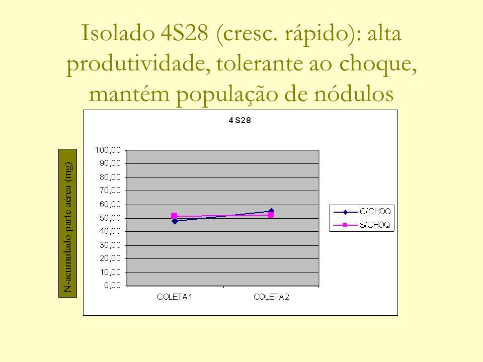 Isolado 4S28 (cresc. rápido): alta produtividade, tolerante ao choque, mantém população de nódulos N-acumulado parte aérea (mg)