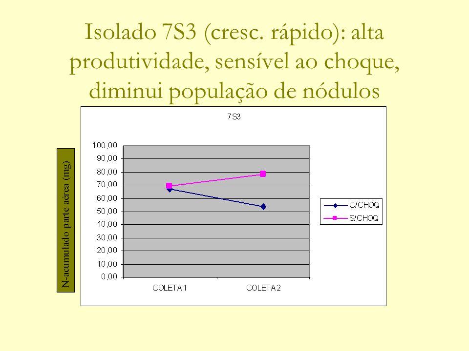 Isolado 7S3 (cresc. rápido): alta produtividade, sensível ao choque, diminui população de nódulos N-acumulado parte aérea (mg)