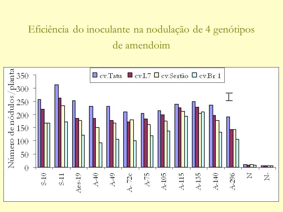 Eficiência do inoculante na nodulação de 4 genótipos de amendoim