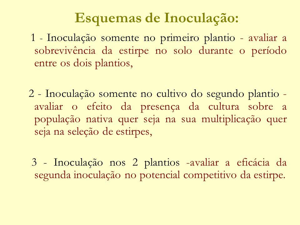 Esquemas de Inoculação: 1 - Inoculação somente no primeiro plantio - avaliar a sobrevivência da estirpe no solo durante o período entre os dois planti