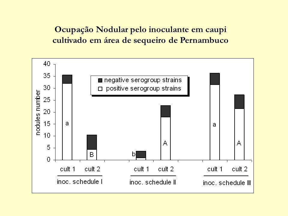 Produtividade de caupi inoculado com estirpes de rizóbio ao longo de 2 plantios