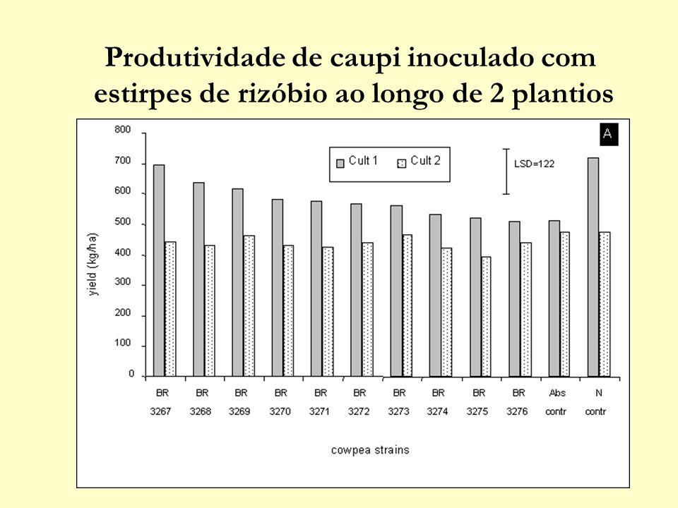 Nitrogênio no grão de caupi inoculado com estirpes de rizóbio ao longo de 2 plantios LSD =0,46