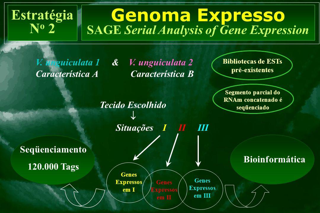 V. unguiculata 1 & V. unguiculata 2 Característica A Característica B Tecido Escolhido  Situações I II III Seqüenciamento 120.000 Tags Bioinformática