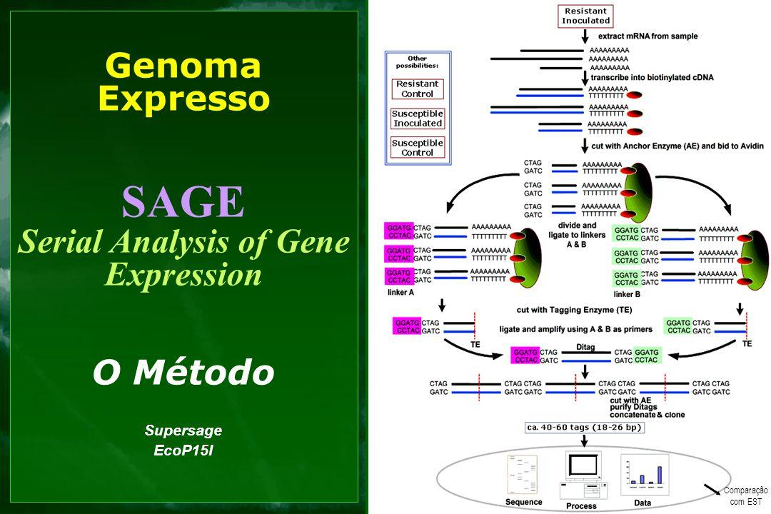 Genoma Expresso SAGE Serial Analysis of Gene Expression O Método Supersage EcoP15I Comparação com EST