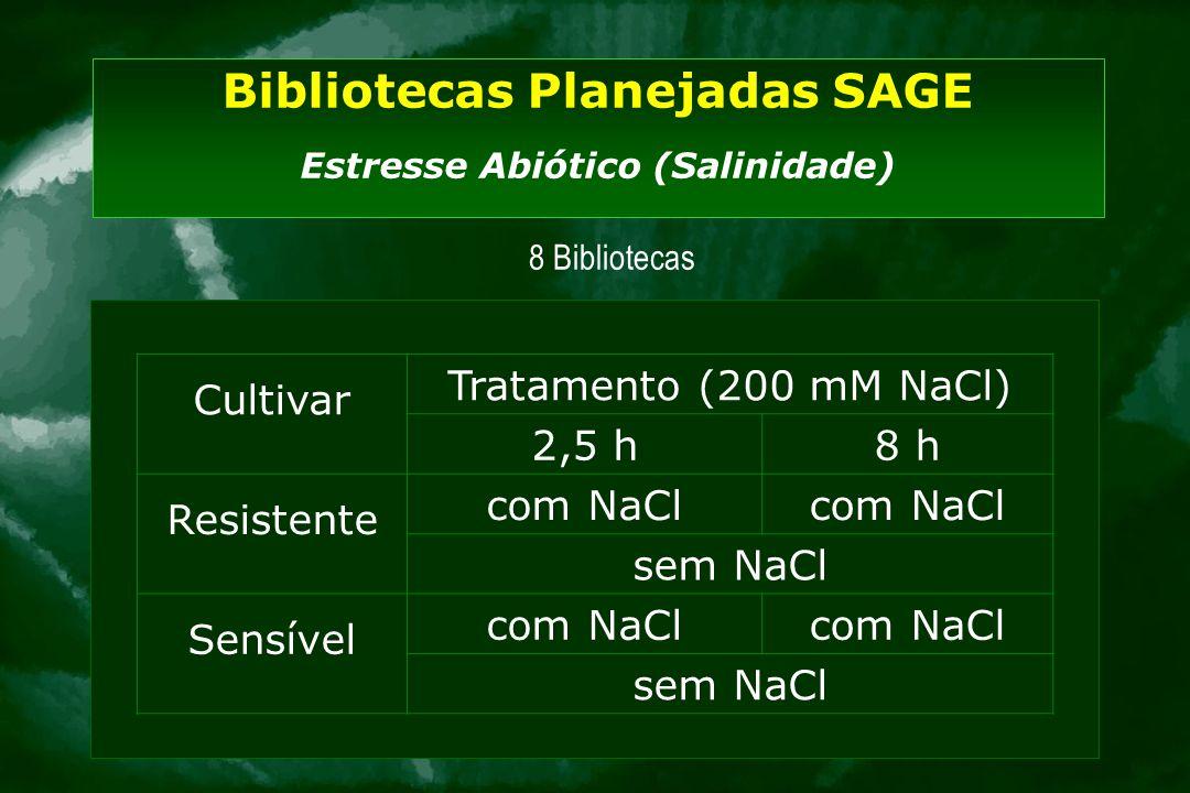 Bibliotecas Planejadas SAGE Estresse Abiótico (Salinidade) Cultivar Tratamento (200 mM NaCl) 2,5 h8 h Resistente com NaCl sem NaCl Sensível com NaCl s