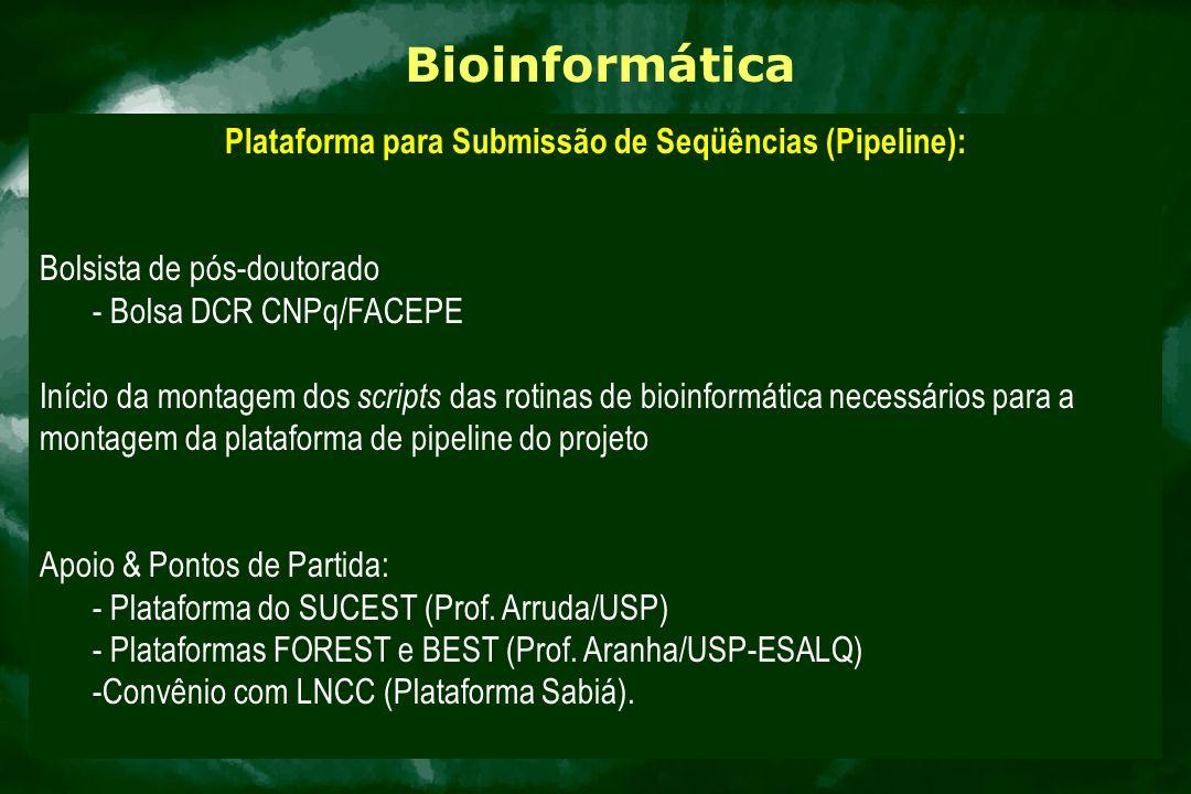 Plataforma para Submissão de Seqüências (Pipeline): Bolsista de pós-doutorado - Bolsa DCR CNPq/FACEPE Início da montagem dos scripts das rotinas de bi