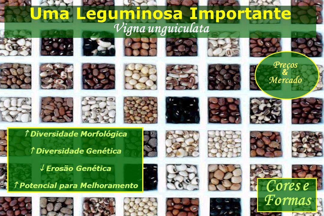 Uma Leguminosa Importante Vigna unguiculata  Diversidade Morfológica  Diversidade Genética  Erosão Genética  Potencial para Melhoramento Cores e F
