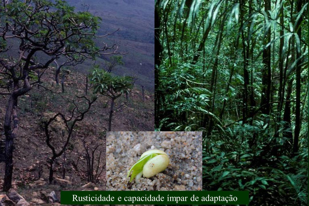 Rusticidade & Capacidade de Adaptação Semi Árido Trópico Úmido Ambientes Contrastantes & Cultivares Tribais Rusticidade e capacidade ímpar de adaptaçã