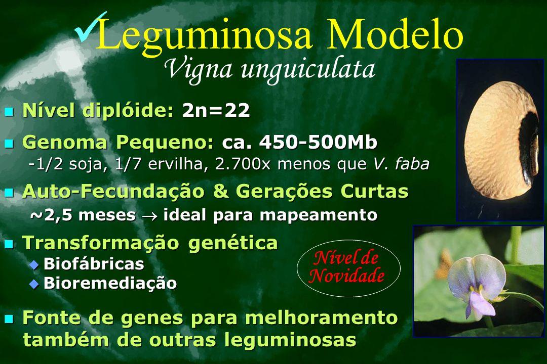 Problemas e Necessidades Vigna unguiculata & Nordeste Brasileiro 1.