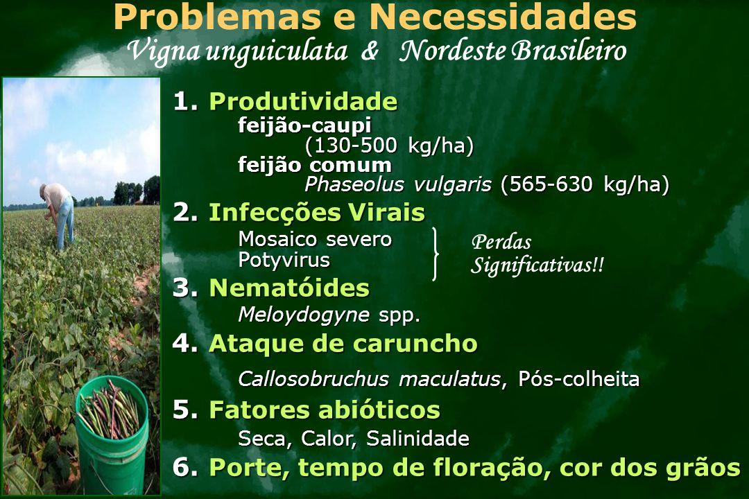 Problemas e Necessidades Vigna unguiculata & Nordeste Brasileiro 1. Produtividade feijão-caupi (130-500 kg/ha) feijão comum Phaseolus vulgaris (565-63