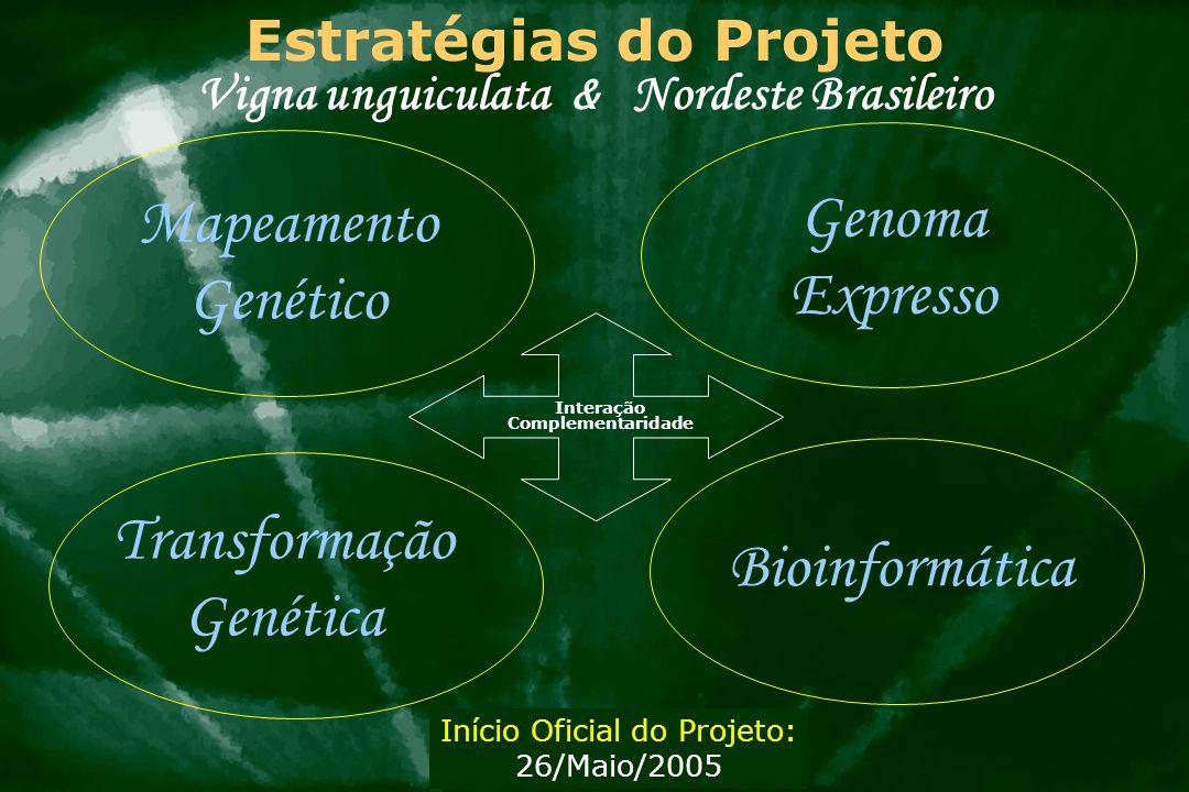 Estratégias do Projeto Vigna unguiculata & Nordeste Brasileiro Interação Complementaridade Mapeamento Genético Genoma Expresso Transformação Genética