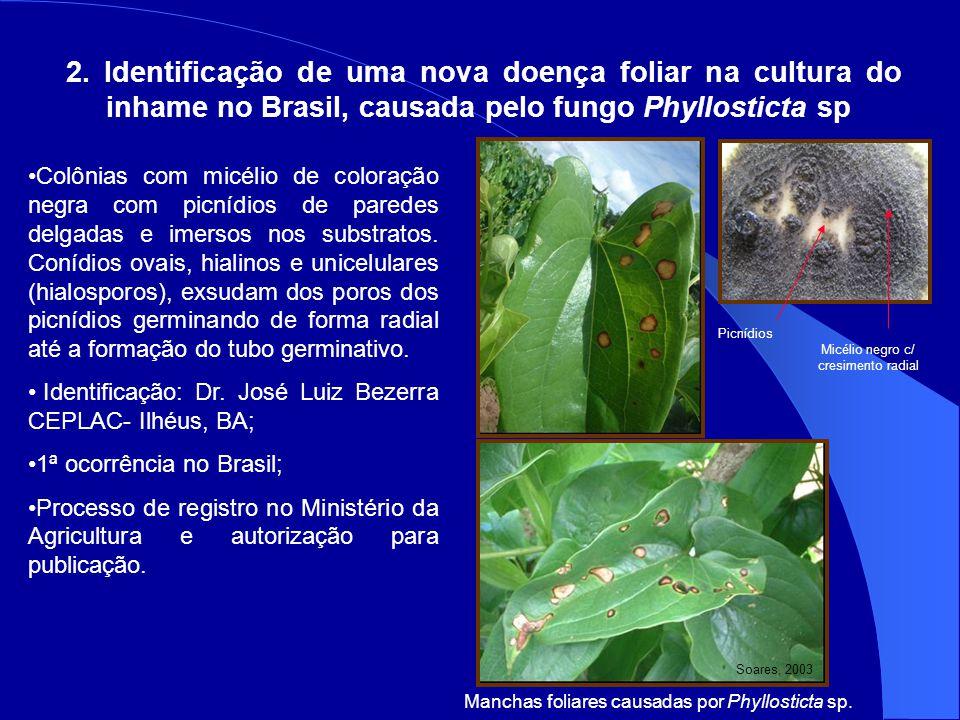 2. Identificação de uma nova doença foliar na cultura do inhame no Brasil, causada pelo fungo Phyllosticta sp Manchas foliares causadas por Phyllostic