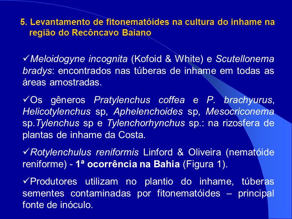 5. Levantamento de fitonematóides na cultura do inhame na região do Recôncavo Baiano Meloidogyne incognita (Kofoid & White) e Scutellonema bradys: enc