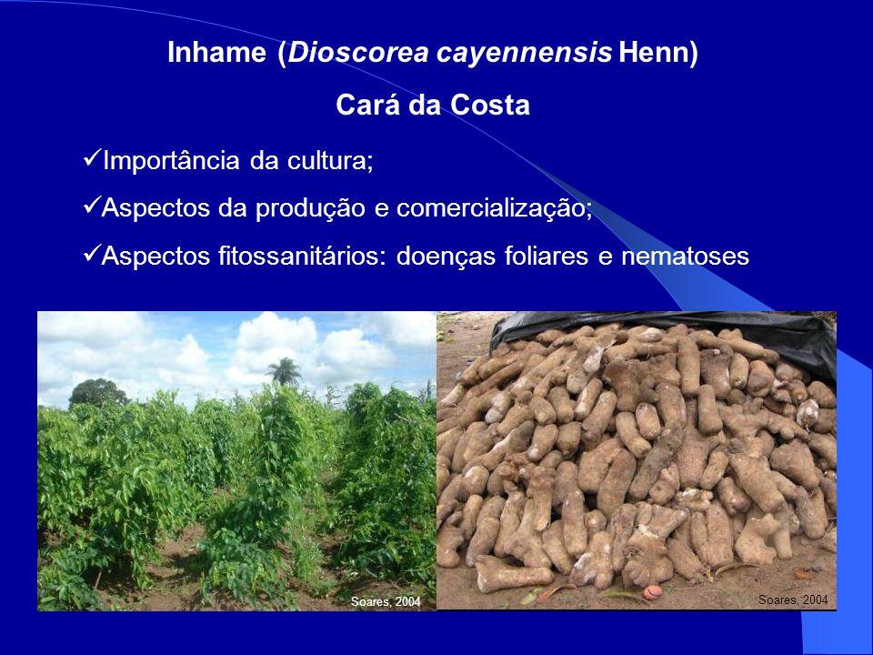 Inhame (Dioscorea cayennensis Henn) Cará da Costa Importância da cultura; Aspectos da produção e comercialização; Aspectos fitossanitários: doenças foliares e nematoses Soares, 2004