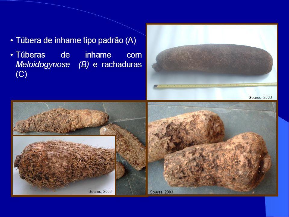 Túbera de inhame tipo padrão (A) Túberas de inhame com Meloidogynose (B) e rachaduras (C) A B C Soares, 2003