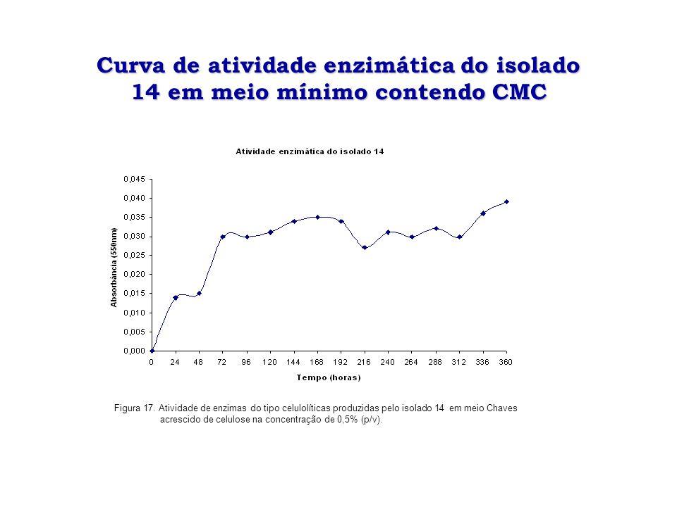 Curva de atividade enzimática do isolado 14em meio mínimo contendo CMC Curva de atividade enzimática do isolado 14 em meio mínimo contendo CMC Figura