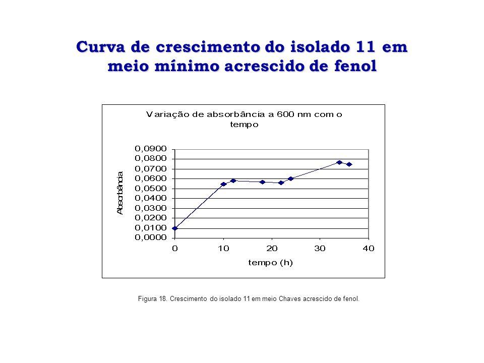 Curva de crescimento do isolado 11 em meio mínimo acrescido de fenol Figura 18. Crescimento do isolado 11 em meio Chaves acrescido de fenol.