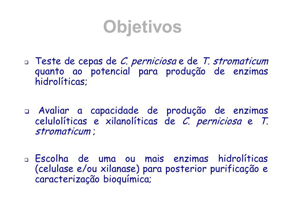 Objetivos  Teste de cepas de C. perniciosa e de T. stromaticum quanto ao potencial para produção de enzimas hidrolíticas;  Avaliar a capacidade de p