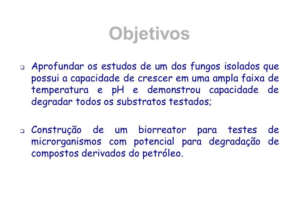 Divulgação Guedes, C.E. S.