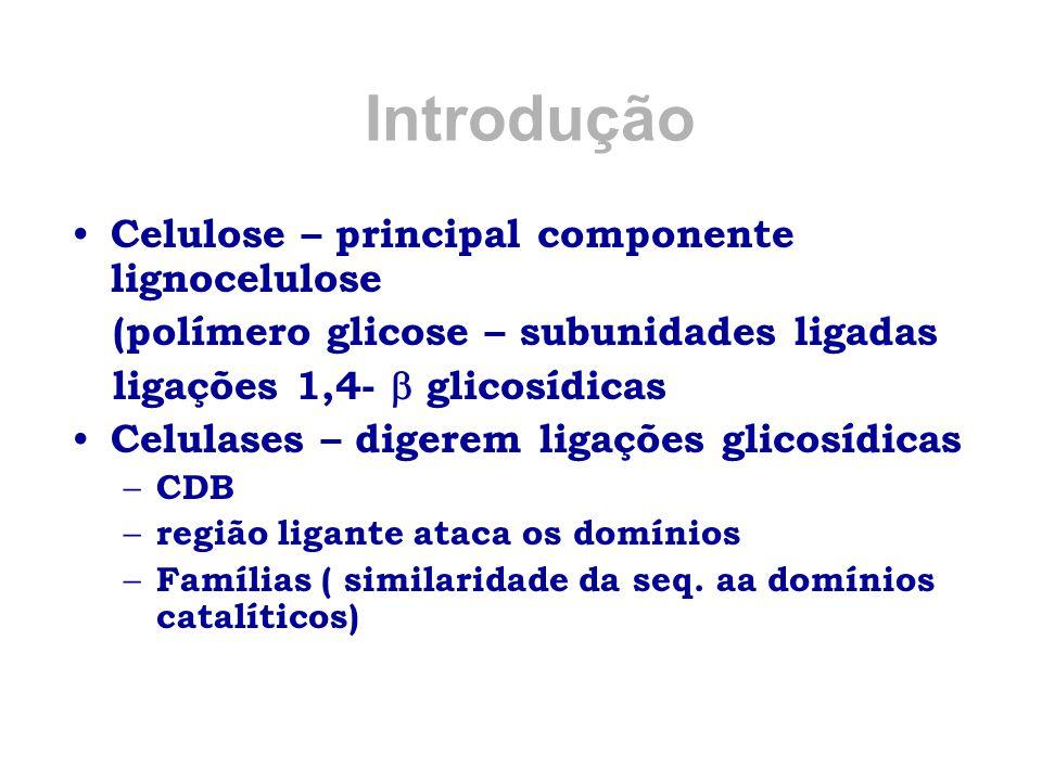 Introdução Celulose – principal componente lignocelulose (polímero glicose – subunidades ligadas ligações 1,4-  glicosídicas Celulases – digerem liga