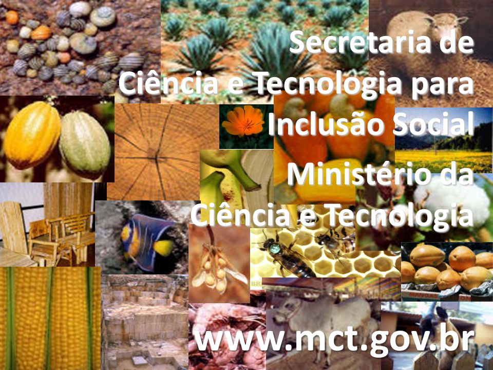 Secretaria de Ciência e Tecnologia para Inclusão Social Ministério da Ciência e Tecnologia www.mct.gov.br