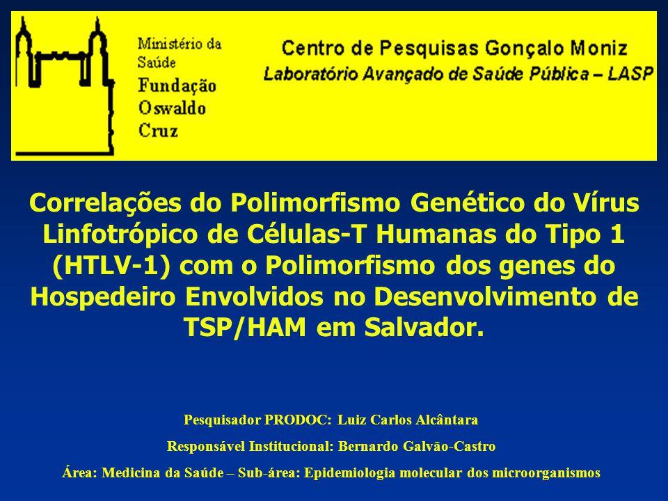 1.Caracterização molecular do genoma proviral (U3- LTR) dos indivíduos infectados – Análise dos polimorfismos destas regiões relacionando os mesmos com o desenvolvimento de TSP/HAM; 2.Caracterização molecular de genes do hospedeiro envolvidos no mecanismo de transativação por Tax (promotores de IL2, IL2-R, IL6) em indivíduos infectados assintomáticos e com TSP/HAM; 3.Determinar a carga proviral nos indivíduos infectados, assintomáticos e com TSP/HAM, correlacionando estes resultados com as alterações genotípicas do hospedeiro.