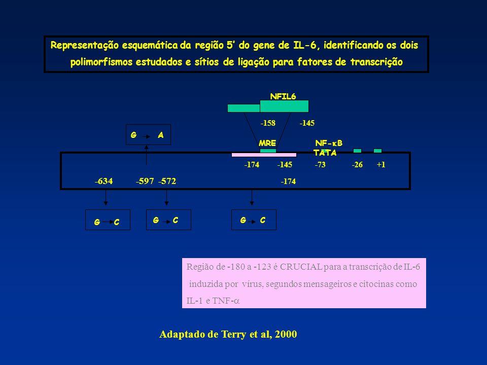  A freqüência de –174G/C IL-6 é altamente heterogêneo entre diferentes populações (Fishman et al.