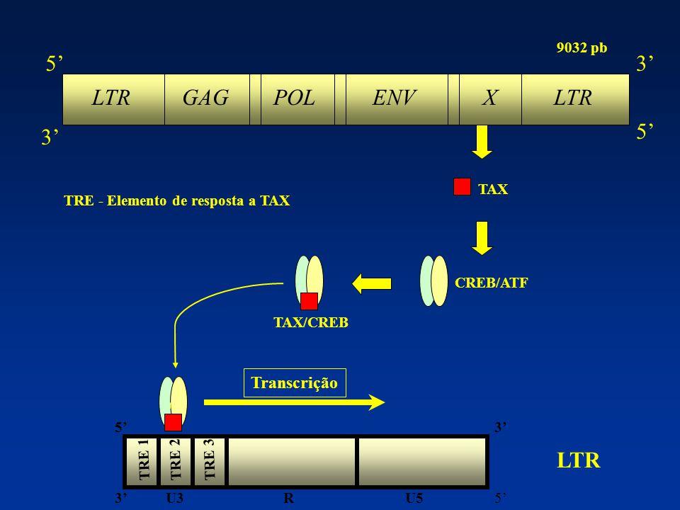 Manuscrito em fase final de preparação ( Trabalho premiado da Jornada Científica do IOC/FIOCRUZ - 2005 ) POPULAÇÃO ESTUDADA ( n=88 ) CHTLV n= 6 TSP/HAM total= 36 FNN n= 30 CHTLV n= 34 ASSINTOMÁTICOS POPULAÇÃO GERAL n=3 total= 52 FNN n=12 ACRE n= 3