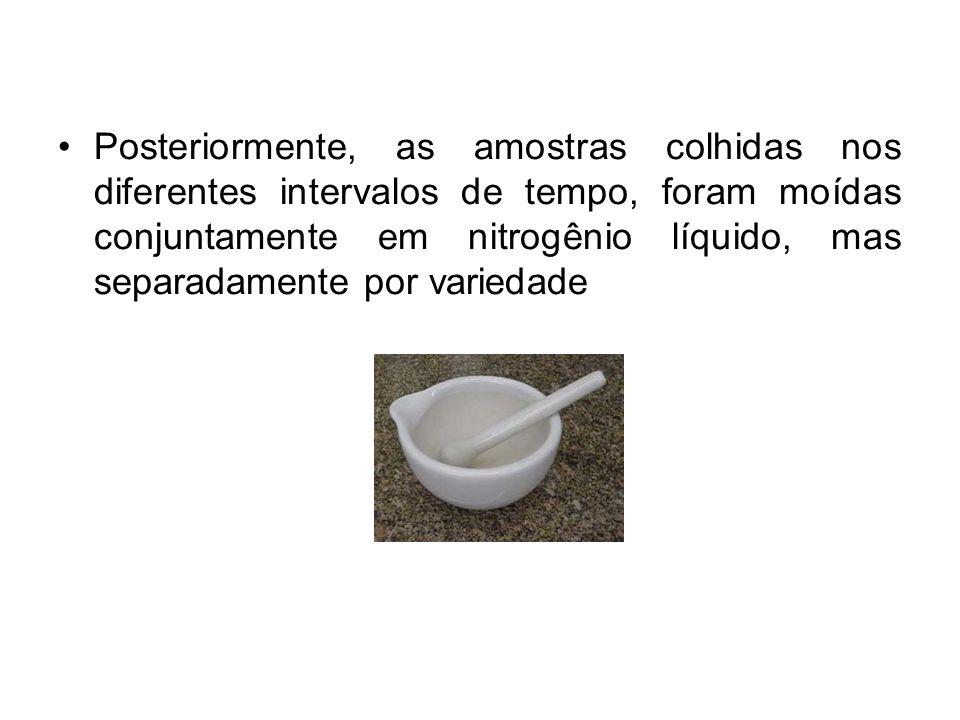 Posteriormente, as amostras colhidas nos diferentes intervalos de tempo, foram moídas conjuntamente em nitrogênio líquido, mas separadamente por varie