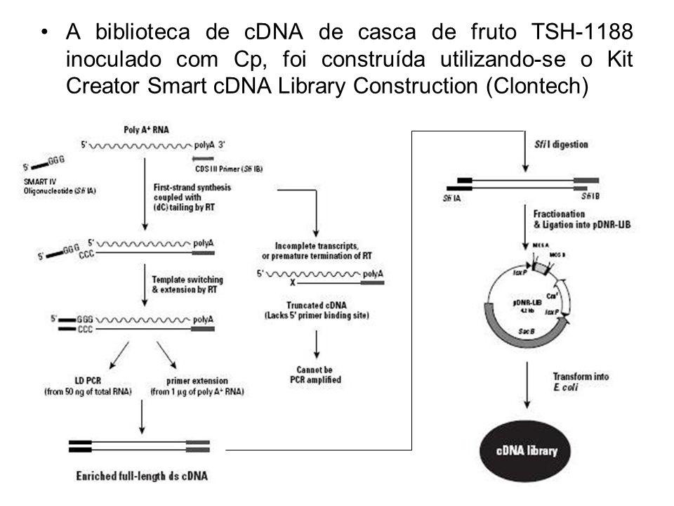 A biblioteca de cDNA de casca de fruto TSH-1188 inoculado com Cp, foi construída utilizando-se o Kit Creator Smart cDNA Library Construction (Clontech