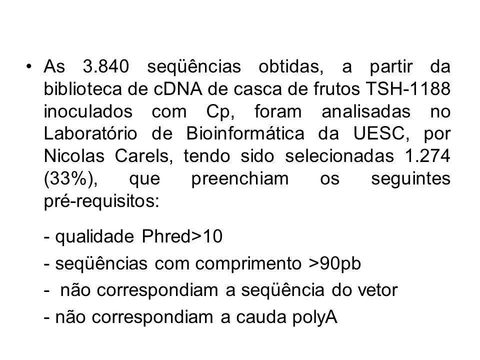 As 3.840 seqüências obtidas, a partir da biblioteca de cDNA de casca de frutos TSH-1188 inoculados com Cp, foram analisadas no Laboratório de Bioinformática da UESC, por Nicolas Carels, tendo sido selecionadas 1.274 (33%), que preenchiam os seguintes pré-requisitos: - qualidade Phred>10 - seqüências com comprimento >90pb - não correspondiam a seqüência do vetor - não correspondiam a cauda polyA