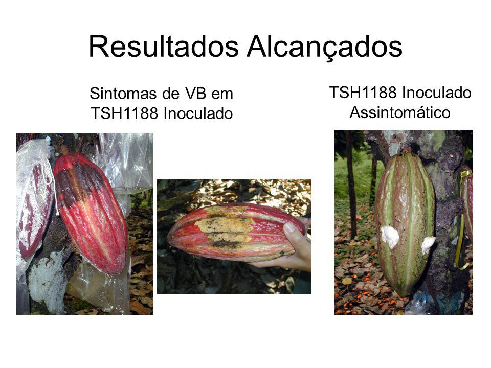 Resultados Alcançados Sintomas de VB em TSH1188 Inoculado TSH1188 Inoculado Assintomático