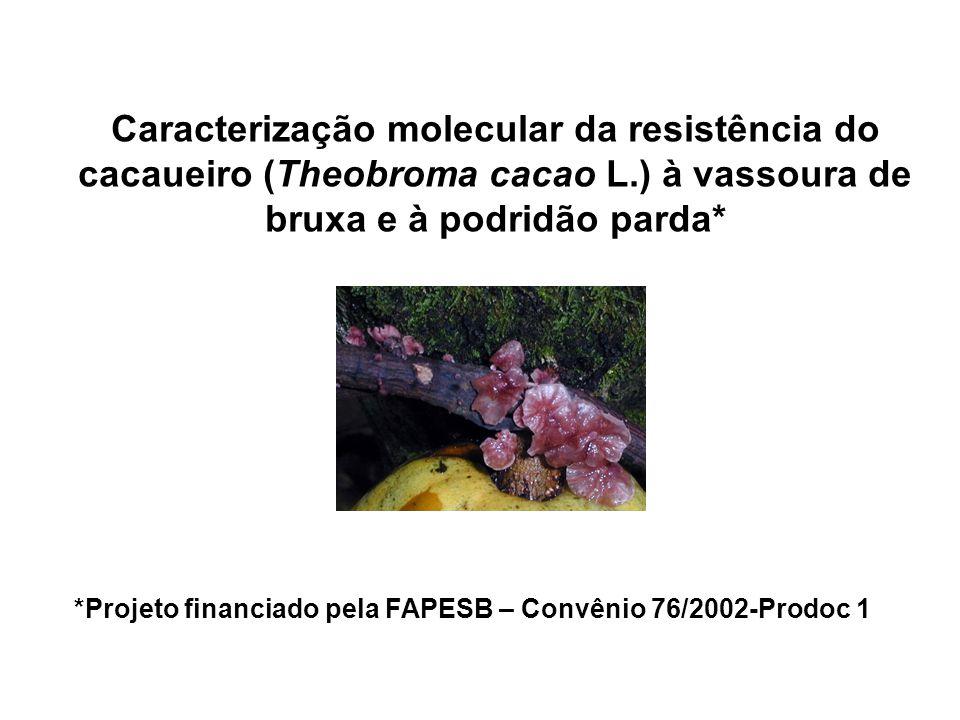 Caracterização molecular da resistência do cacaueiro (Theobroma cacao L.) à vassoura de bruxa e à podridão parda* *Projeto financiado pela FAPESB – Co