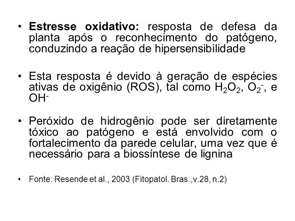 Estresse oxidativo: resposta de defesa da planta após o reconhecimento do patógeno, conduzindo a reação de hipersensibilidade Esta resposta é devido à geração de espécies ativas de oxigênio (ROS), tal como H 2 O 2, O 2 -, e OH - Peróxido de hidrogênio pode ser diretamente tóxico ao patógeno e está envolvido com o fortalecimento da parede celular, uma vez que é necessário para a biossíntese de lignina Fonte: Resende et al., 2003 (Fitopatol.