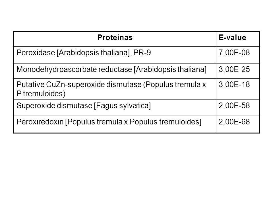 ProteínasE-value Peroxidase [Arabidopsis thaliana], PR-97,00E-08 Monodehydroascorbate reductase [Arabidopsis thaliana]3,00E-25 Putative CuZn-superoxide dismutase (Populus tremula x P.tremuloides) 3,00E-18 Superoxide dismutase [Fagus sylvatica]2,00E-58 Peroxiredoxin [Populus tremula x Populus tremuloides]2,00E-68