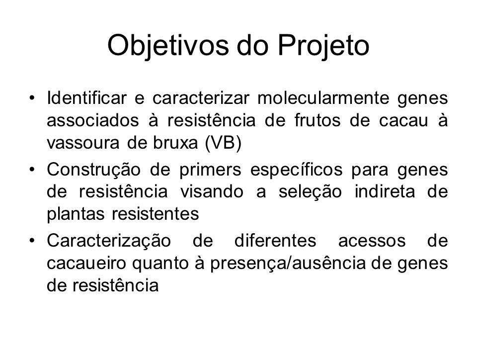 Objetivos do Projeto Identificar e caracterizar molecularmente genes associados à resistência de frutos de cacau à vassoura de bruxa (VB) Construção d