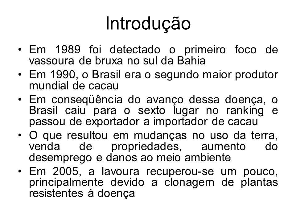 Introdução Em 1989 foi detectado o primeiro foco de vassoura de bruxa no sul da Bahia Em 1990, o Brasil era o segundo maior produtor mundial de cacau Em conseqüência do avanço dessa doença, o Brasil caiu para o sexto lugar no ranking e passou de exportador a importador de cacau O que resultou em mudanças no uso da terra, venda de propriedades, aumento do desemprego e danos ao meio ambiente Em 2005, a lavoura recuperou-se um pouco, principalmente devido a clonagem de plantas resistentes à doença