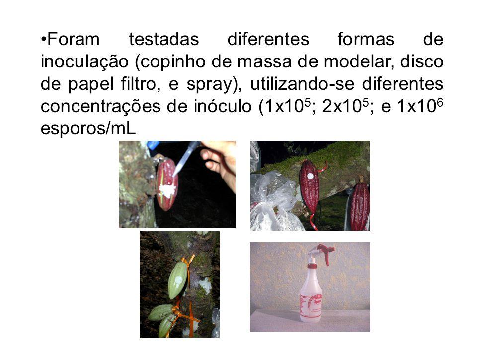 Foram testadas diferentes formas de inoculação (copinho de massa de modelar, disco de papel filtro, e spray), utilizando-se diferentes concentrações de inóculo (1x10 5 ; 2x10 5 ; e 1x10 6 esporos/mL