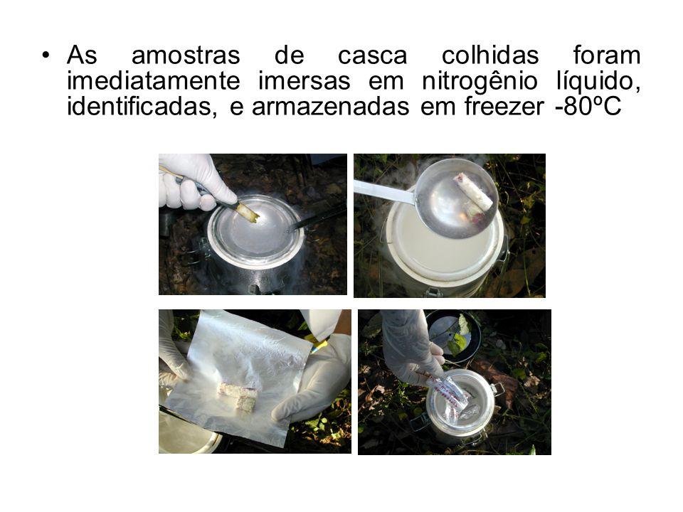 Posteriormente, as amostras colhidas nos diferentes intervalos de tempo, foram moídas conjuntamente em nitrogênio líquido, mas separadamente por variedade
