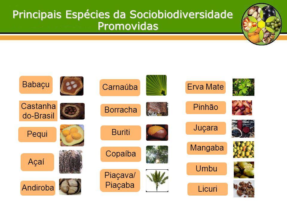 Açaí Umbu Buriti Carnaúba Copaíba Pequi Piaçava/ Piaçaba Castanha do-Brasil Babaçu Principais Espécies da Sociobiodiversidade Promovidas Promovidas An