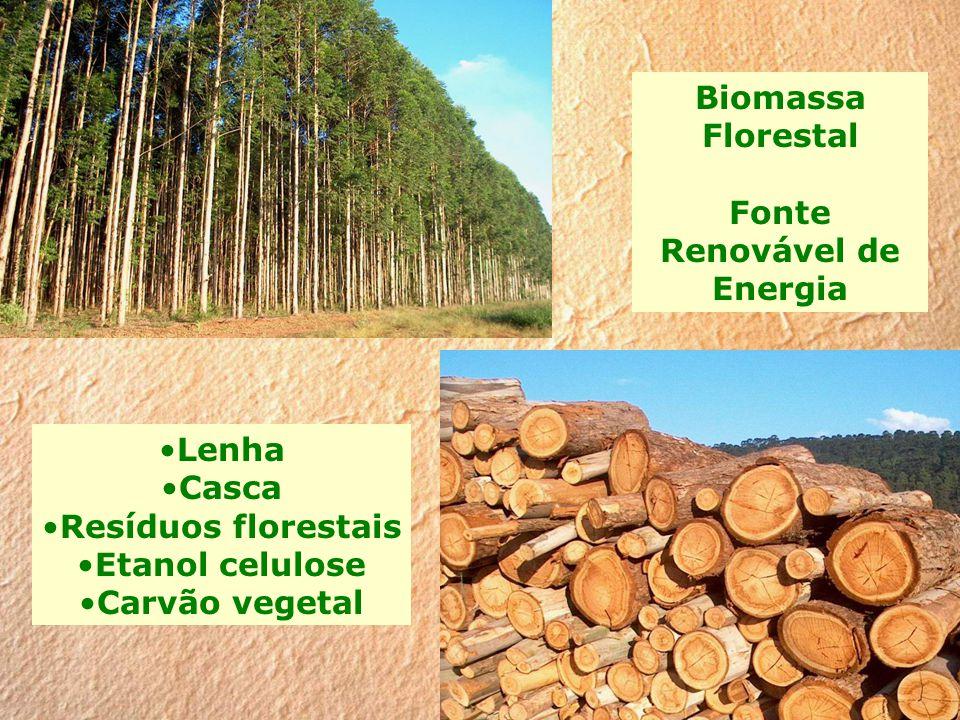 Biomassa Florestal Fonte Renovável de Energia Lenha Casca Resíduos florestais Etanol celulose Carvão vegetal