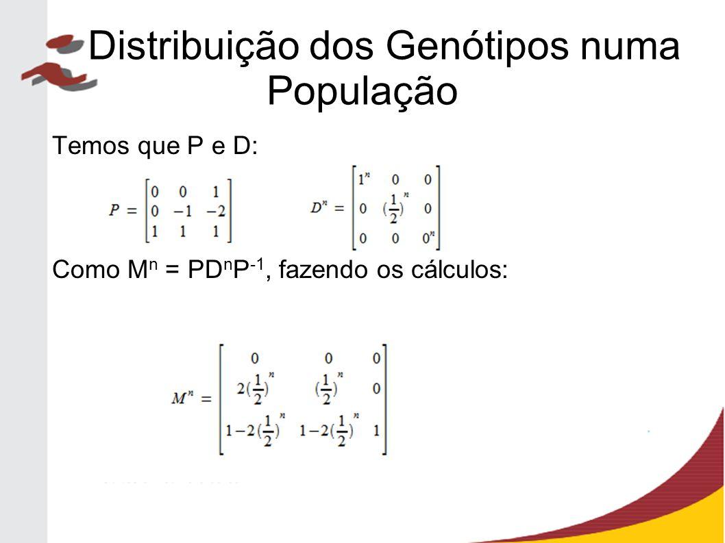 Temos que P e D: Como M n = PD n P -1, fazendo os cálculos: Distribuição dos Genótipos numa População