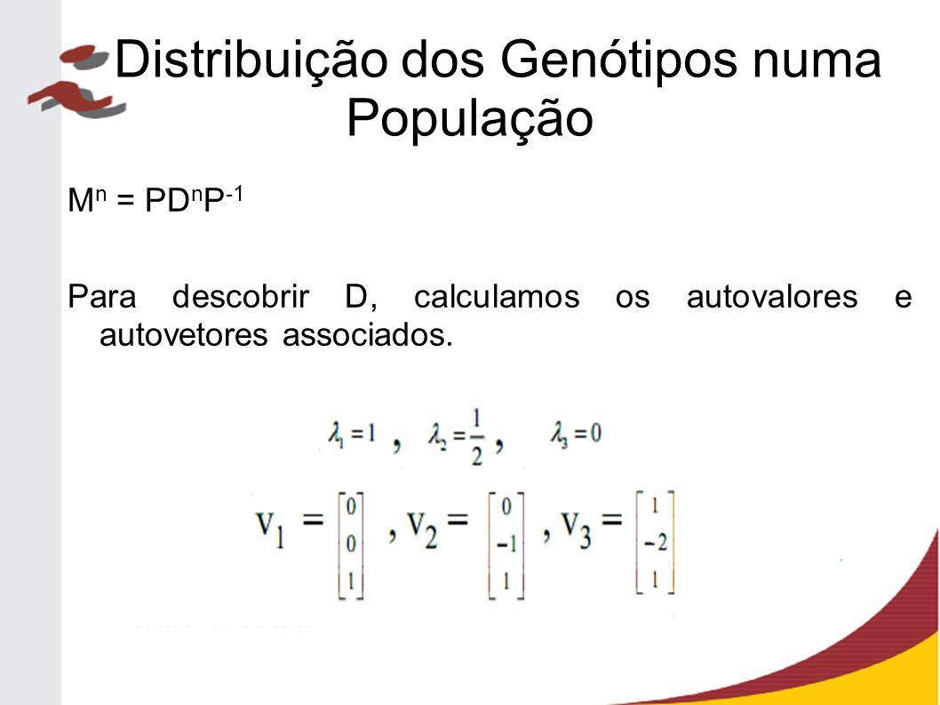 M n = PD n P -1 Para descobrir D, calculamos os autovalores e autovetores associados. Distribuição dos Genótipos numa População