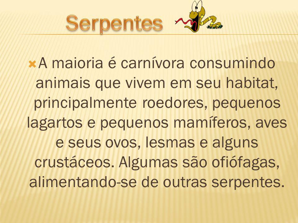  A maioria é carnívora consumindo animais que vivem em seu habitat, principalmente roedores, pequenos lagartos e pequenos mamíferos, aves e seus ovos